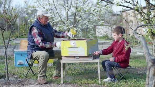 Thumbnail for Family Relationships, Cute Little Grandson and His Grandfather Restore an Old Hive, Paint Them Using