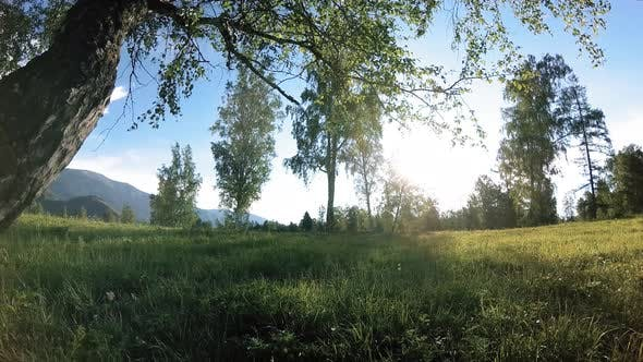 Thumbnail for Sunny Rural Meadow at Mountain Landscape with Green Grass, Trees and Sun Rays. Diagonal Movement on