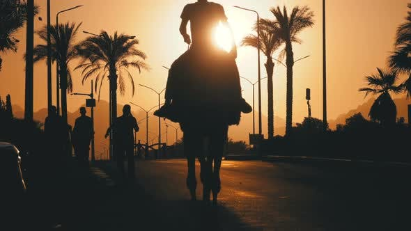 Thumbnail for Silhouette of Man on Camel Moving Along the Road in City Into the Sunset. Egypt. Slow Motion