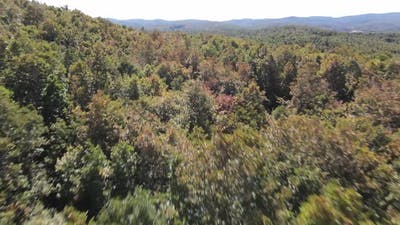 Fast Drone Forest Flying
