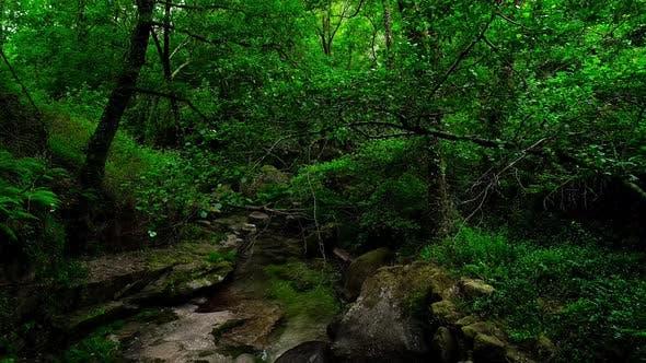 Thumbnail for Lush Green Rain Forest Mountain