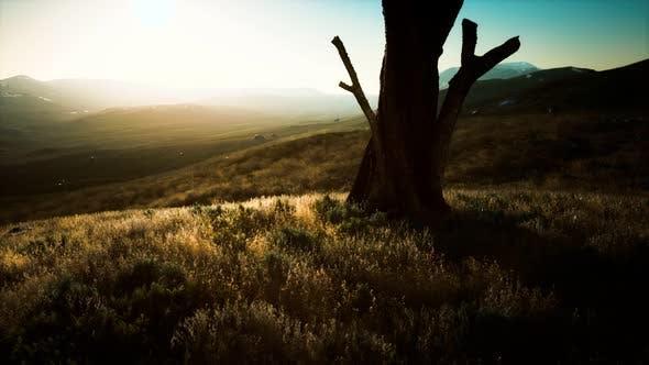 Alter Baumstumpf Kofferraum auf dem Hügel bei Sonnenuntergang