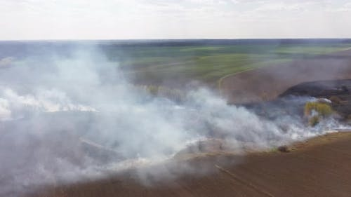 Burning Field, Fire and Smoke. Disaster and Emergency Events, Negative Impact on Flora