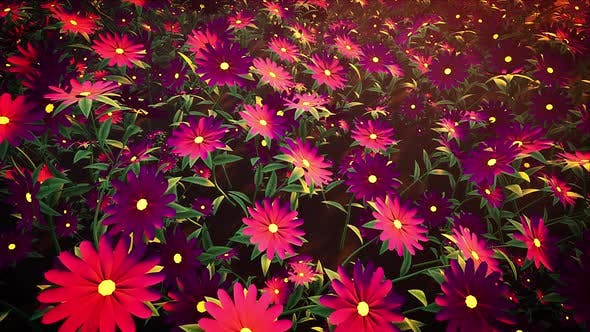 Thumbnail for Flower Field Loop #03