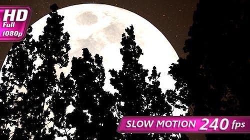 Wald und ein riesiger Sepia Mond