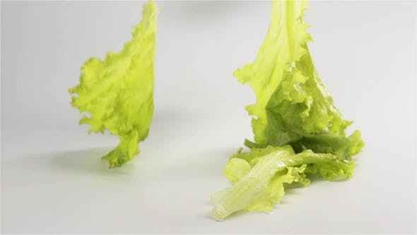 Lettuce Fall on Surface Multiple Times