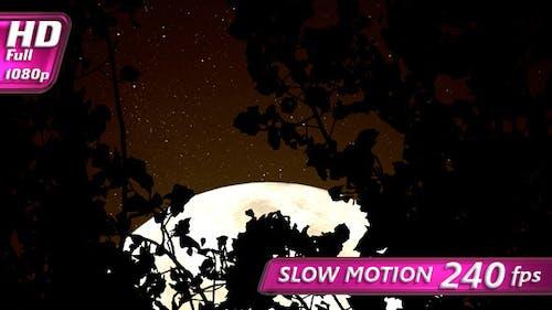 Sepia Mond im Wald