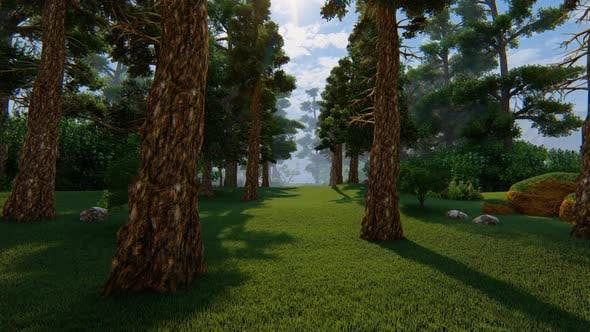 Thumbnail for Coniferous Forest Growing In The Mountains