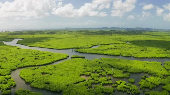 Fantasy Jungle Landscape of Tropical Rivers in the Mangrove Tropical Forest in Siargao, Philippines
