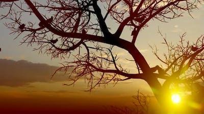 Sunset Tree and Birds Close Up