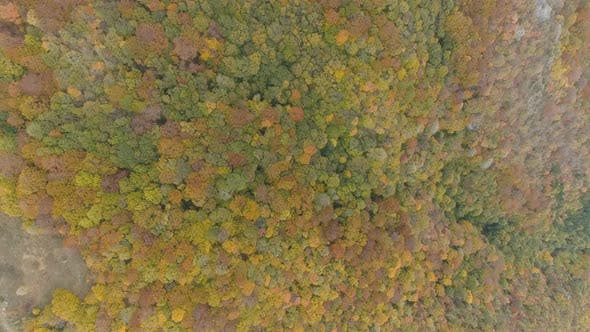 Thumbnail for Looking Down on Forest of Balkans. Autumn Colors
