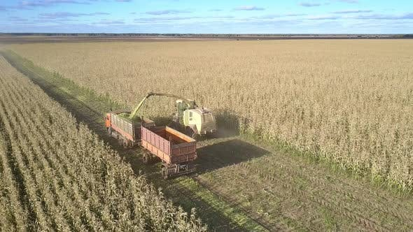 Thumbnail for Combine Cutting Device Carries Out Crop Mowing for Silage