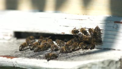 Beehive Entrance with Bees