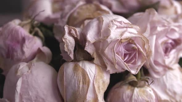 Faded Bouquet of Pink Roses