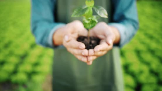 Thumbnail for Man Holding Plant in Hands on Farm