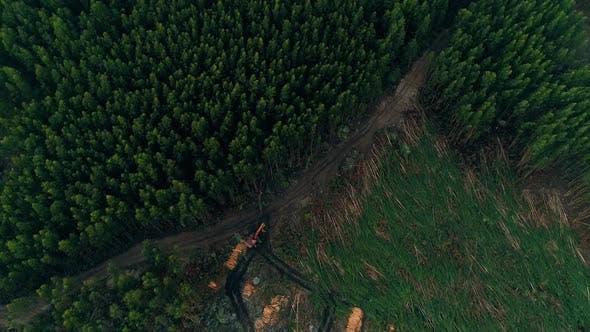 Thumbnail for Deforestation