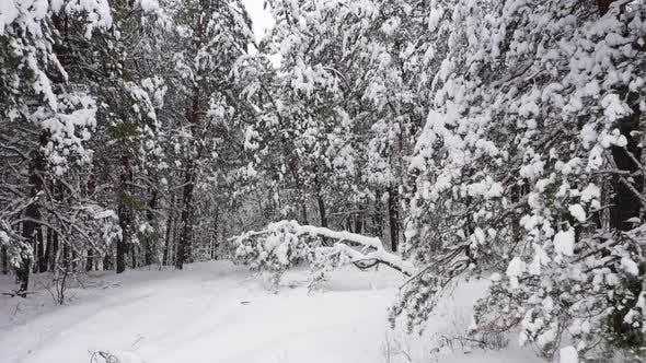 Baum auf dem Feld im Winter