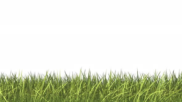 Thumbnail for Growing Grass