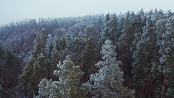 Thumbnail for Amazing Landscape of Winter Forest