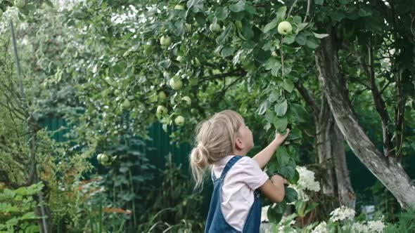 Cover Image for Little Girl Reaching for Apples in Garden