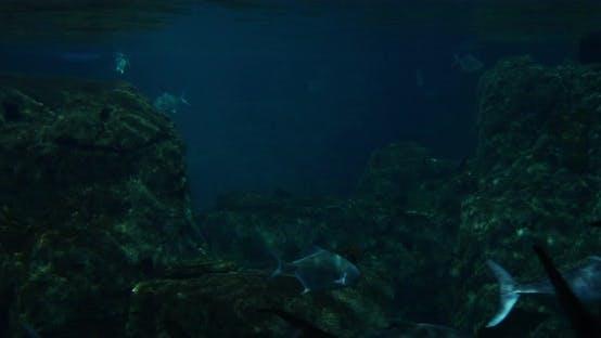 Cover Image for Fishes In Aquarium