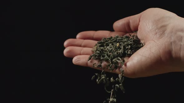 Dried leaves of green tea fall from man's palm