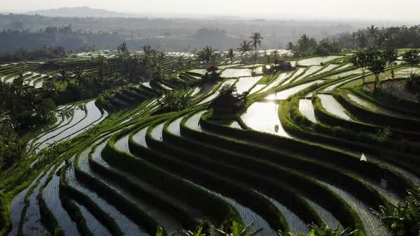 Cover Image for Aerial View Of Water Filled Rice Terrace At Morning. Beautiful Landscape Of Tropical Rice Fields