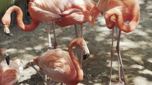 Pink Flamingo Florida Wildlife