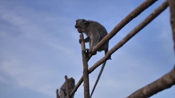 Thumbnail for Wild Monkeys on Top of a Volcano on a Tropical Island