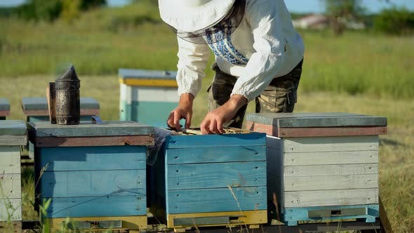 Thumbnail for Beekeeper Collecting Honey