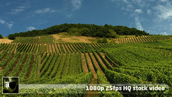 Thumbnail for Moselle Valley Wineyard 1