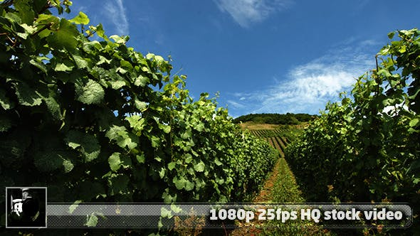 Thumbnail for Moselle Valley Wineyard 2