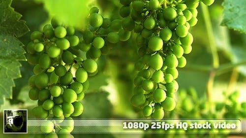 Moselle Valley Wineyard 3
