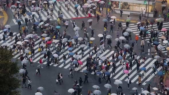 Thumbnail for Shibuya Crossing In Tokyo Japan