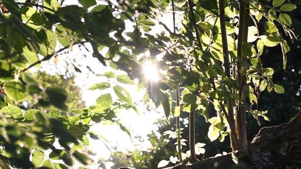 Thumbnail for Sliding Forest 02