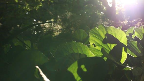 Thumbnail for Sliding Forest 04