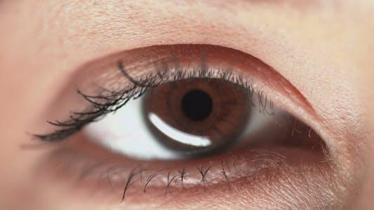 Thumbnail for Brown Eye