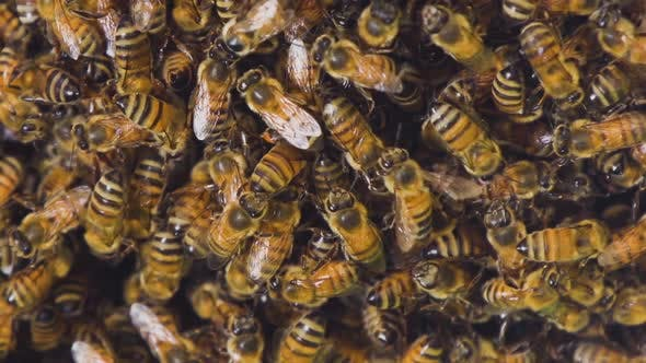 Bees Hive Slow Motion