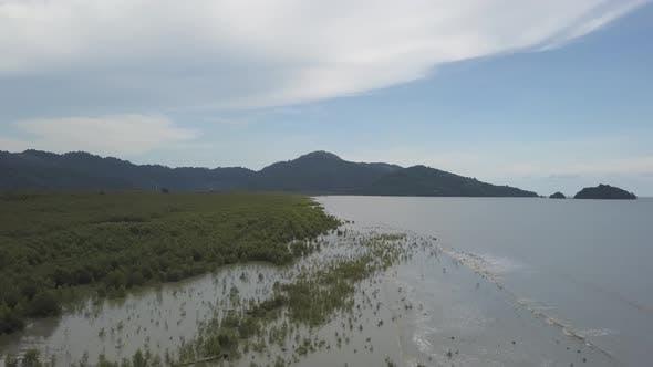 Welle traf die Küste, geschützt durch Mangrovenbaum