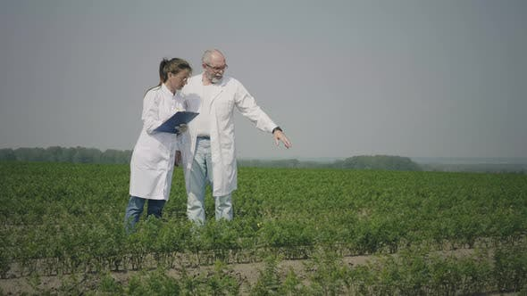 Agronomists working outdoors in field