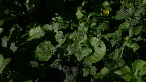 Green garden plants high dynamic 4K 3840X2160 UHD video - Garden plants mixed 4K 2160p UHD video