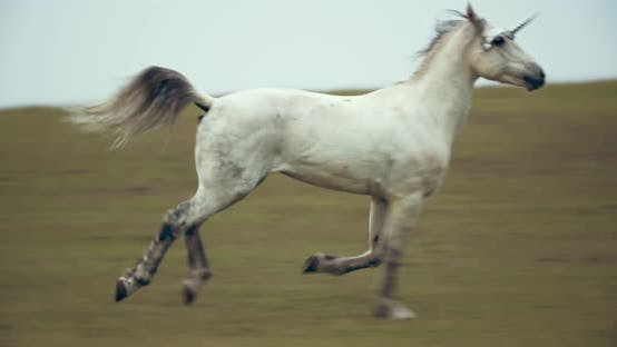 Thumbnail for White Unicorn Is Running in the Field on the Hills, Mythological Animal