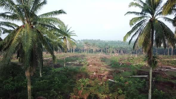 Farmer clear the oil palm plantation land at Malaysia