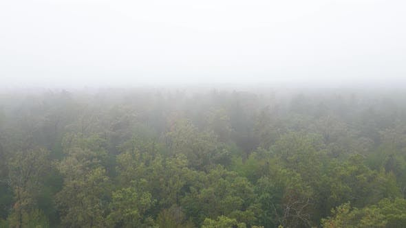 Thumbnail for Fog in the Forest Aerial View