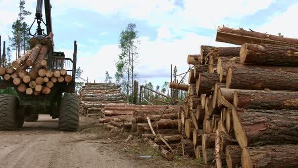 Thumbnail for Heavy Lifting Crane Loading Cut Wooden Logs. Loading of Timber. Loader in Work