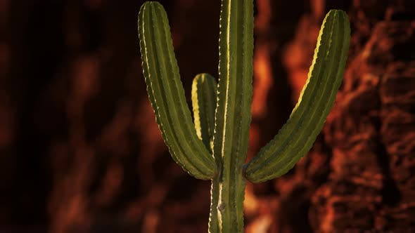 Cover Image for Cactus in the Arizona Desert Near Red Rock Stones