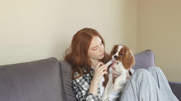 A Pretty Redhaired Young Woman Gives Her Dog a Drink of Medicine From a Syringe While Sitting at