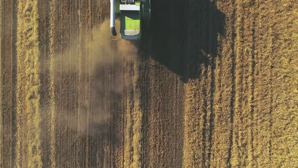 Aerial View of Modern Combine Harvesting Wheat on the Field. Flying Directly Above Combine.