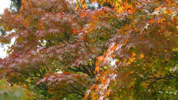 Herbst Jahreszeiten