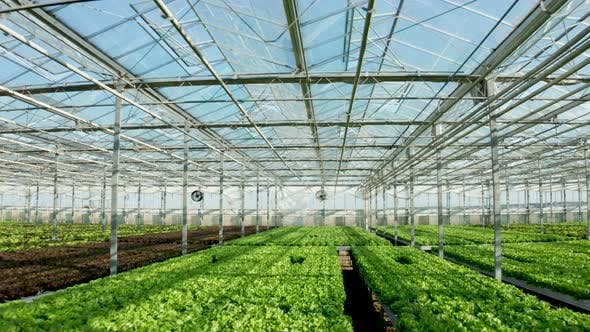 Thumbnail for Aeriel View of Modern Agriculture in a Greenhouse